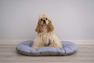 Premium Photo   Cocker spaniel puppy on his new dog bed on a grey  background.
