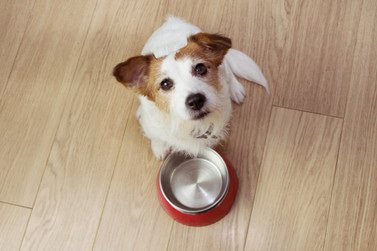 Dog Eating Images | Free Vectors, Stock Photos & PSD